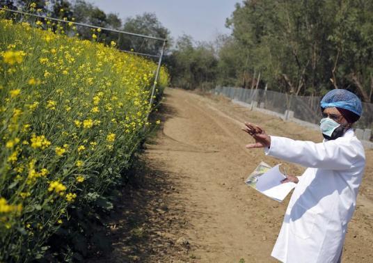 Modi bets on GM crops for green revolution