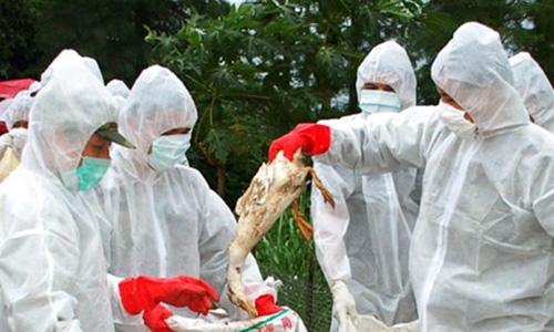 US developing bird flu vaccine, no distribution plans yet