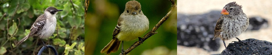 Darwin's Galapagos birds share rare taste for flowers - study