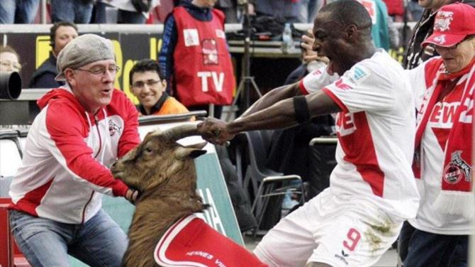 Cologne's Ujah apologizes to goat for rough treatment