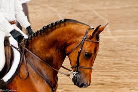 International Equestrian Federation suspends UAE over horse welfare issues