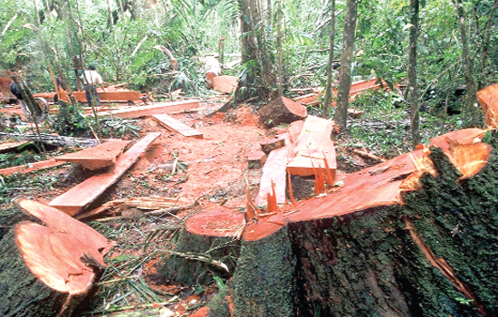 Given new powers, Pakistanis take on illegal loggers