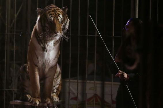 Wanted: homes for wild animals as Mexico bans them from circuses