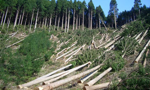 Given new powers, local citizens take on illegal loggers in Gilgit Baltistan