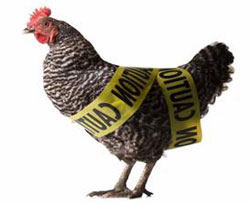 US reports bird flu outbreak in the country
