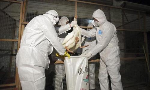 Suspected bird flu in Arkansas poultry threatens exports