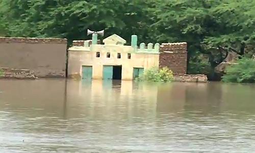 Indus in high flood; Extremely high flood in Guddu, Sukkher barrages