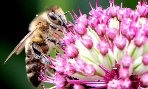 Humans may face malnutrition if birds and bees disappear