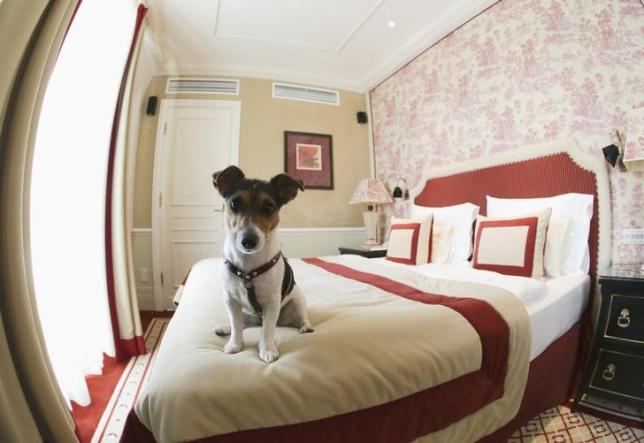 Are pets in the bedroom a problem for sleep?