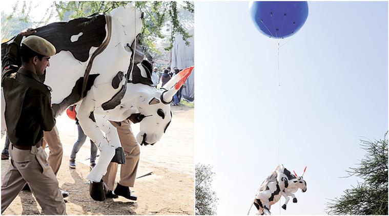 Indian artists detained for cow art installation in Jaipur