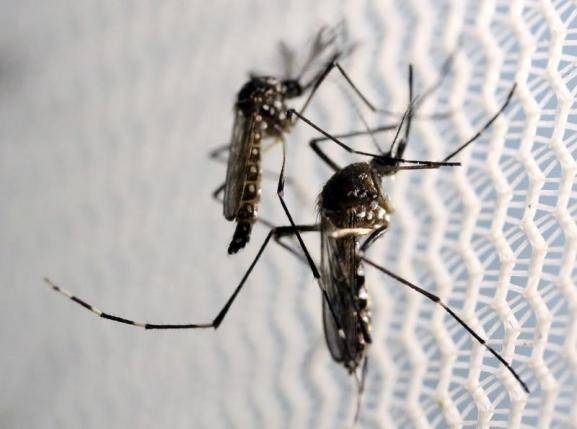 St. Lucia confirms first two cases of Zika, contracted locally