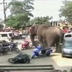 Wild elephant rampage in Indian village caught on video