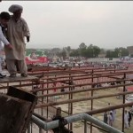 Preparations for PTI's Bannu rally underway