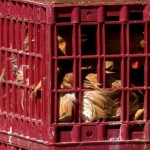 Hong Kong suspends live poultry trade on bird flu concerns
