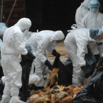 China confirms human bird flu case in Guizhou province