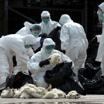 China H7N9 bird flu death toll fell to 24 in April