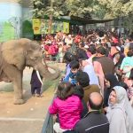 Famed female elephant 'Suzi' dies in Lahore Zoo