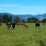 Second New Zealand farm tests positive to cattle disease