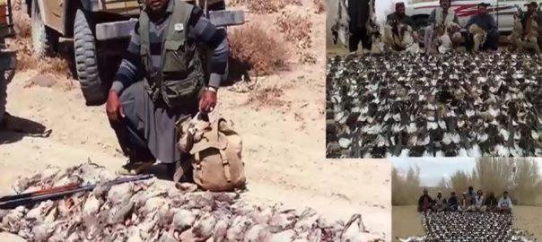 balochistan archives 92 news hd plus