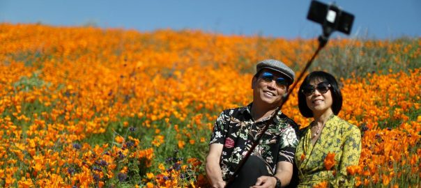 superbloom Poppy Spring 'superbloom' Crowds California