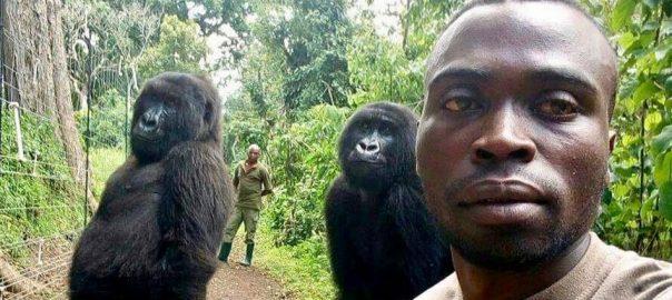 picture Congo Congo ranger's gorrila selfie congo rangers