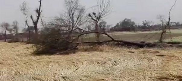 Incessant, rain, hailstorm, destroy, crops, Punjab