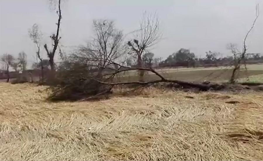 Incessant rain, hailstorm destroy crops in Punjab