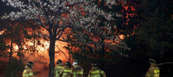 wildfire seoul fire fighters gangwon