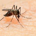 Dengue Rawalpindi Islamabad dengue virus dengue cases