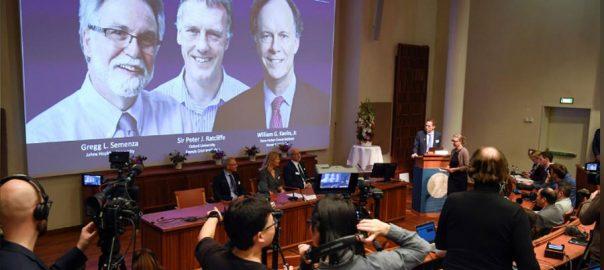 Nobel prize oxygen Two US a British Nobel Medicine Prize doctors cells' response to oxygen LONDON