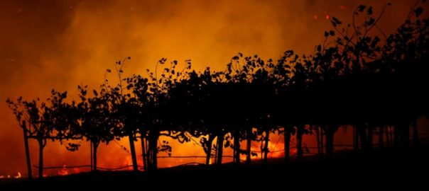 tree branch,power lines ,winds ,wildfire ,residents ,famed Getty Center museum ,Los Angeles