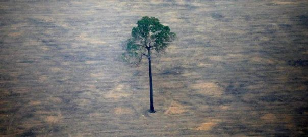 Brazil, Amazon, deforestation, climbs, 100% , November ,last year