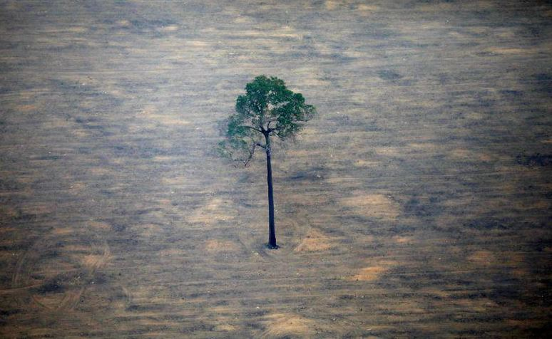 Brazil, Amazon, deforestation, climbs, 100% , November ,last year