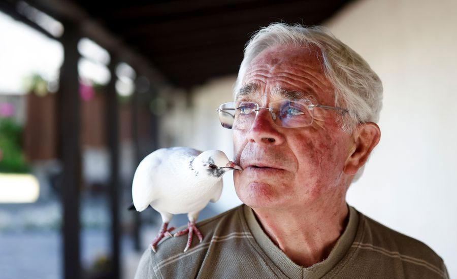 Birdman of Brittany: French pensioner befriends pigeon